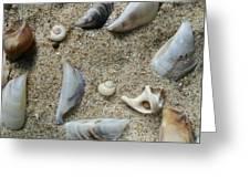 Sandy Seashells Greeting Card
