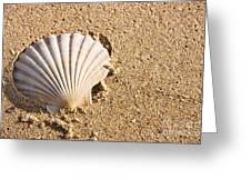 Sandy Shell Greeting Card by Jorgo Photography - Wall Art Gallery