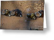 Sandy Shells Greeting Card