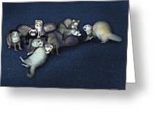 Sandy's Ferrets Greeting Card