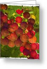 Sangiovese Grapes Greeting Card