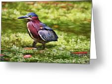 Sanibel Green Heron Greeting Card