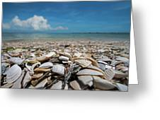 Sanibel Island Sea Shell Fort Myers Florida Broken Shells Greeting Card