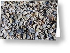 Sanibel Island Seashells I Greeting Card