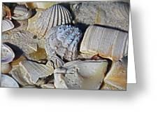Sanibel Island Seashells Iv Greeting Card