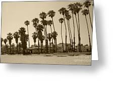 Santa Barbara Palms Greeting Card