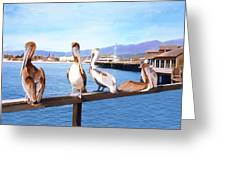 Santa Barbara Pelicans Greeting Card