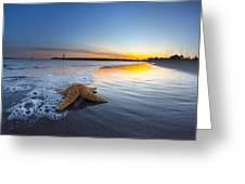 Santa Cruz Starfish Greeting Card