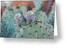 Santa Fe Prickly Pear Cactus Greeting Card