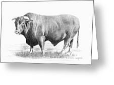 Santa Gertrudis Bull Greeting Card by Arline Wagner