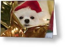 Santa Paws Greeting Card by Leslie Leda