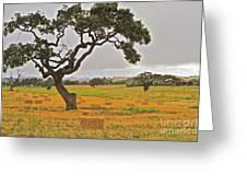 Santa Ynez Hayfield Greeting Card by Gus McCrea