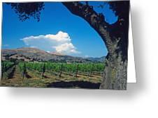 Santa Ynez Vineyard View Greeting Card by Kathy Yates