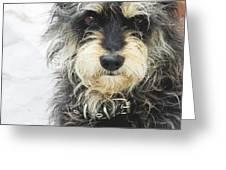 Santorini Dog Greeting Card