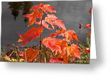 Sapling By The Pond Greeting Card