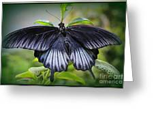 Sapphire Blue Swallowtail Butterfly Greeting Card