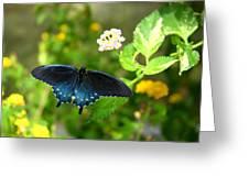Sapphire Swallowtail Greeting Card