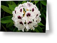 Sappho Rhododendron Greeting Card