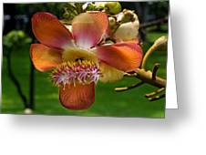 Sara Tree Flower Dthb104 Greeting Card