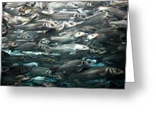 Sardines 1 Greeting Card