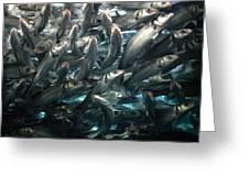 Sardines 2 Greeting Card