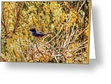 Sardinian Warbler Greeting Card