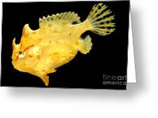 Sargassum Anglerfish Greeting Card