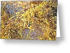 Sargassum Seaweed Greeting Card