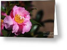 Sasanqua Camellia Greeting Card
