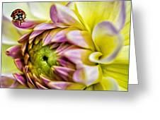 Sasha Bug Greeting Card