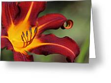Sassy Daylily Greeting Card