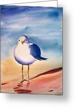 Sassy Seagull Greeting Card