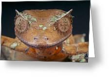 Satanic Leaf-tailed Gecko Greeting Card