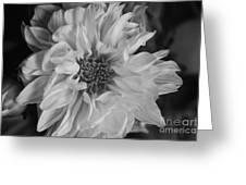 Satin Flora Bw Greeting Card