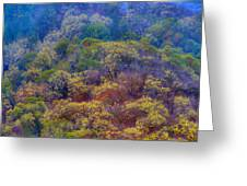 Saturated Forest Greeting Card