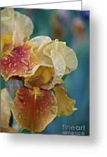 Saturated Iris Greeting Card