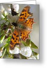Satyr Comma Greeting Card