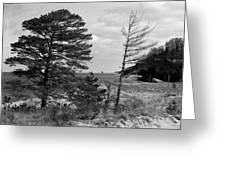 Saugatuck State Park In November Greeting Card