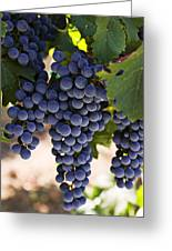 Sauvignon Grapes Greeting Card