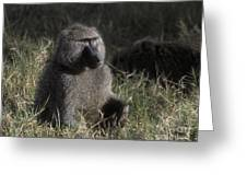 Savannah Olive Baboon  Greeting Card