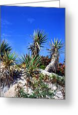 Saw Palmetto Canaveral National Seashore Greeting Card