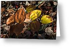 Sawbrier Or Greenbriar In The Fall Greeting Card