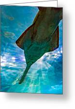 Sawfish Greeting Card