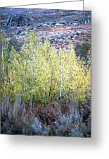 Sawtooth National Forest 2 Greeting Card