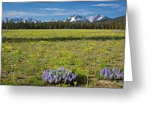 Sawtooths And Wildflowers Greeting Card