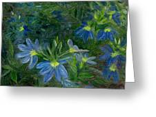 Scaevola Greeting Card