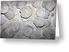 Scallop Fossils Greeting Card by Dirk Wiersma