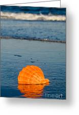 Scallop Seashell On The Beach Greeting Card