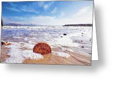 Scallop Shell On The Beach - Impressions Greeting Card