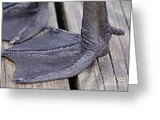 Scaly Canadian Goose Foot - No1 Greeting Card